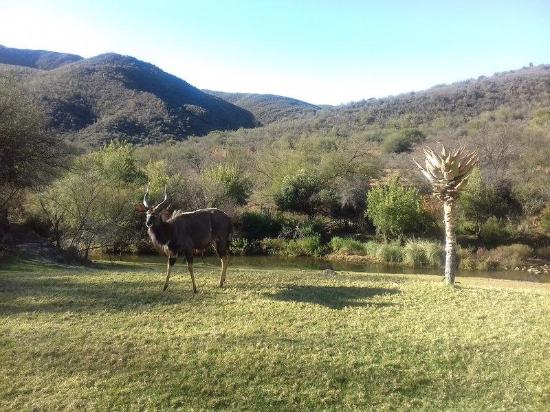 Oudtshoorn game reserve wildlife